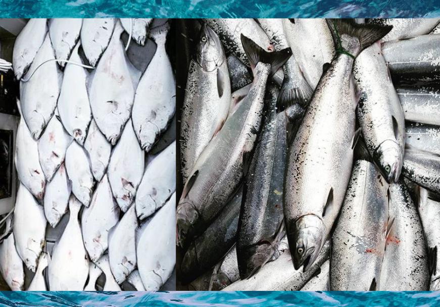 halibut-fishing-charters-seward-alaska